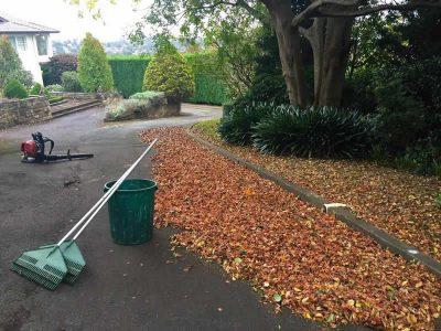 Glenhaven large conifer hedging and complete property maintenance - Landscape Maintenance 2