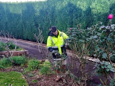 Glenhaven large conifer hedging and complete property maintenance - Landscape Maintenance 3