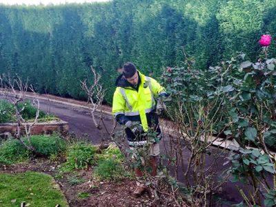 Glenhaven large conifer hedging and complete property maintenance - Landscape Maintenance 3
