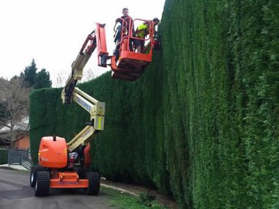 Glenhaven large conifer hedging and complete property maintenance - Landscape Maintenance 7
