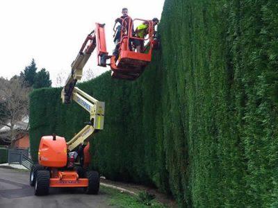 Glenhaven large conifer hedging and complete property maintenance - Landscape Maintenance 7
