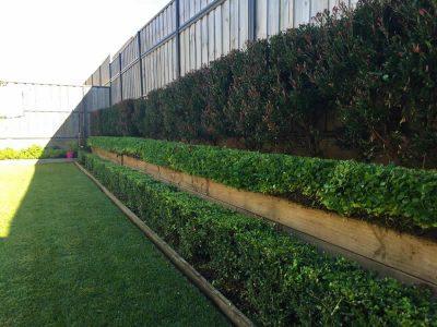 Landscape Maintenance 4