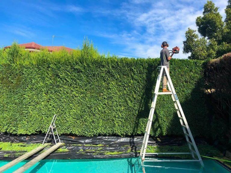 Landscape Maintenance Beaumont Hills Hedging 2