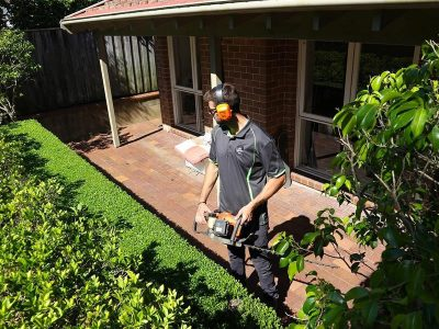 Mosman<br>Hedging & plant care