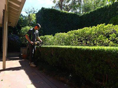 Landscape Maintenance Mosman 2